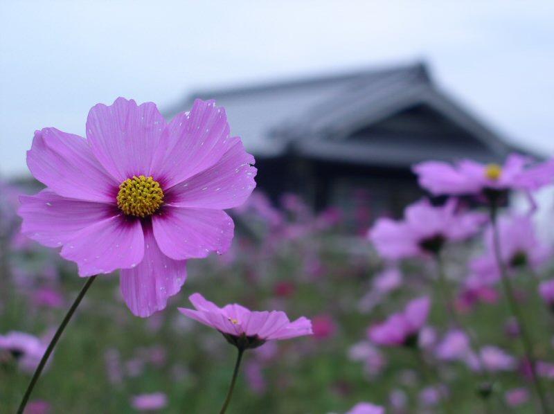 Nara Flowers