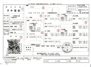 Japanese Beef Certificate