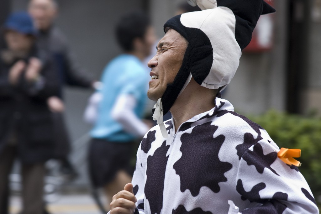 marathon-suffering-cow