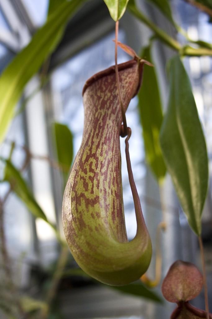 shin-kiba-botanical-garden4