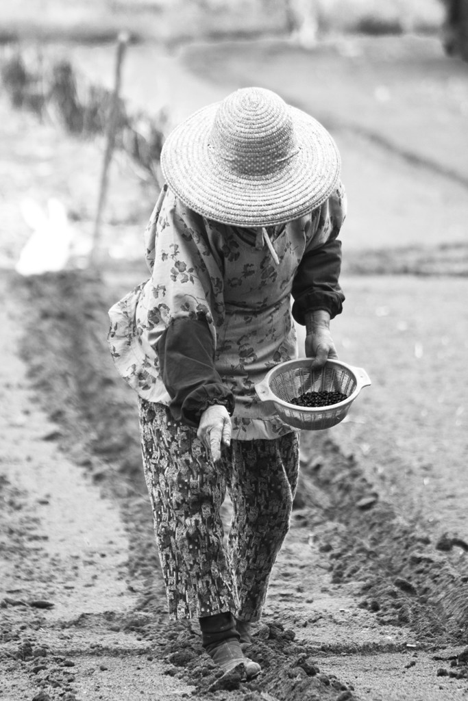 mito planting